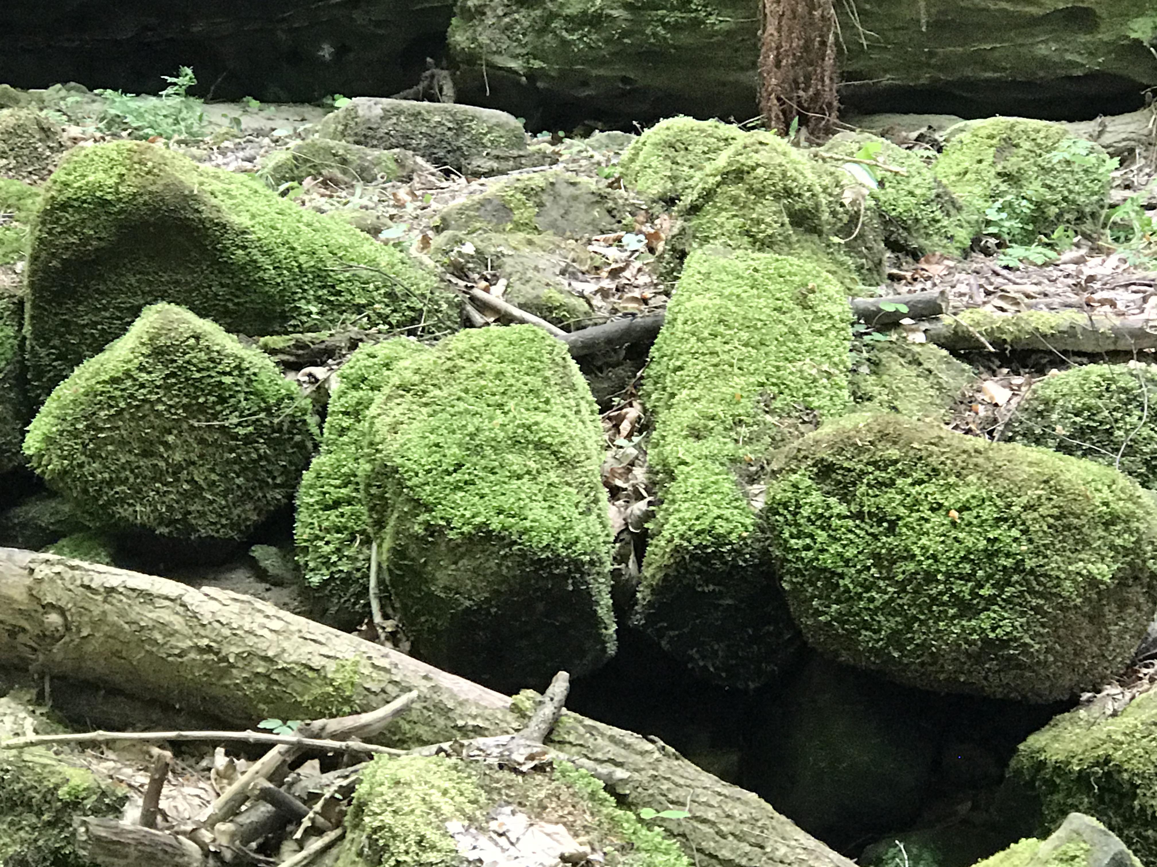 Moos auf Steine