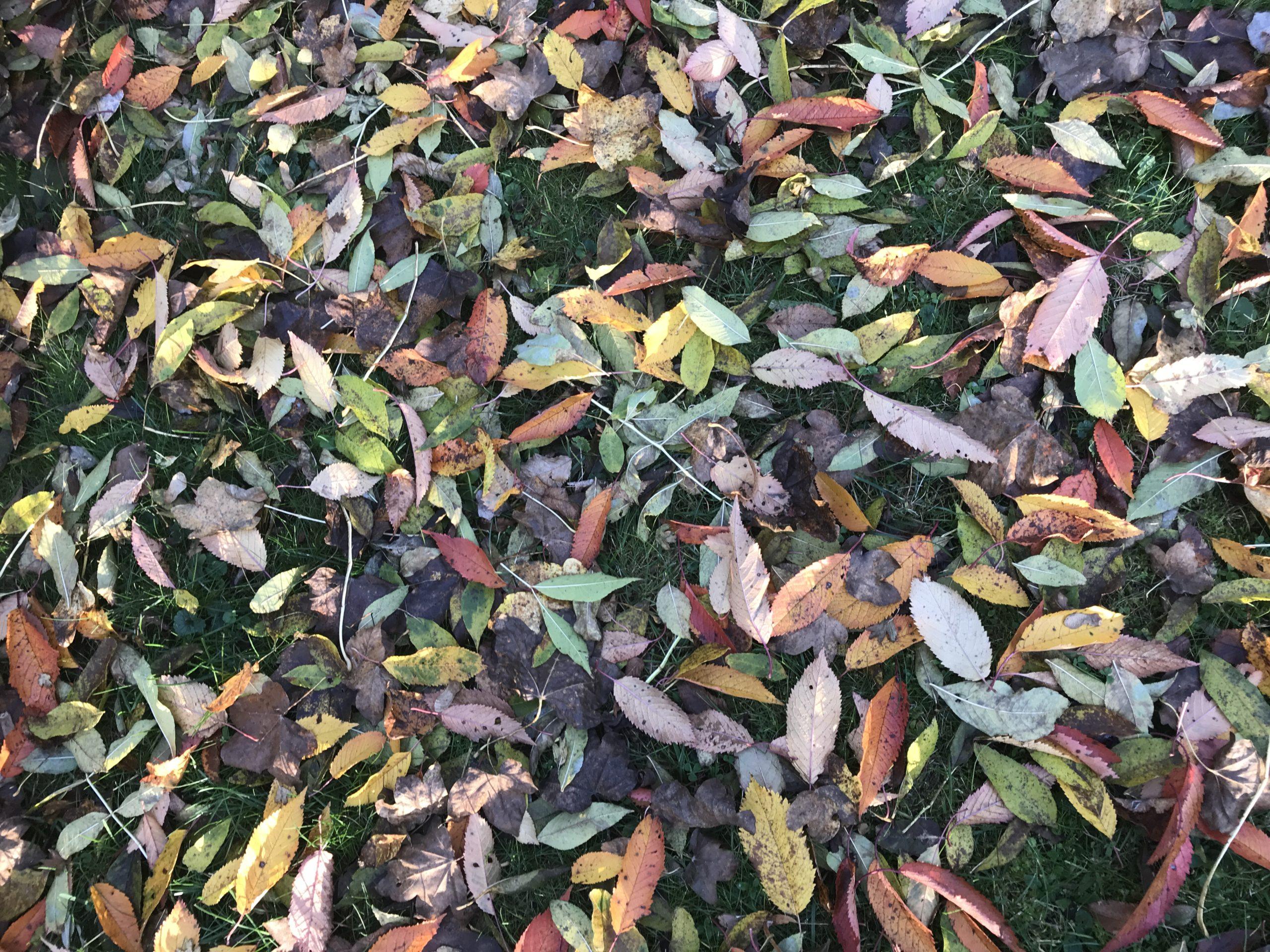 Blätter im Herbst beruhigen bei Stress