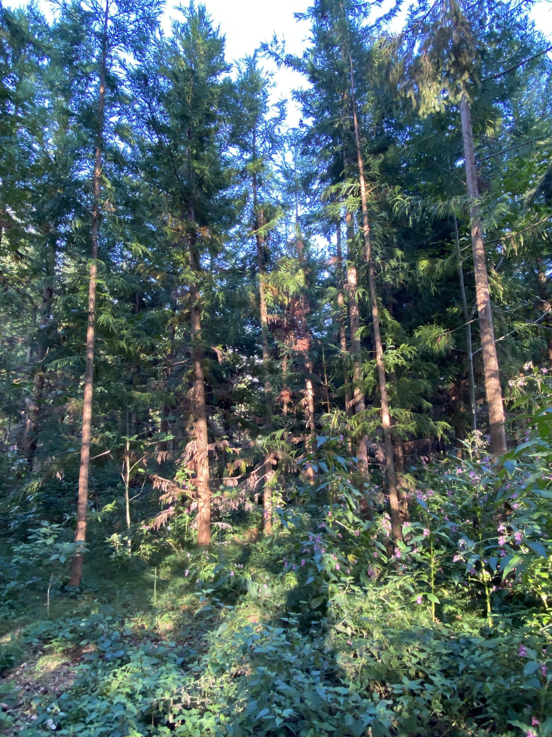 Der Wald als Resonanzraum
